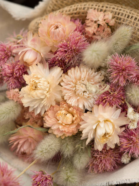 Dried flower Dried flower dried plant stock pictures, royalty-free photos & images