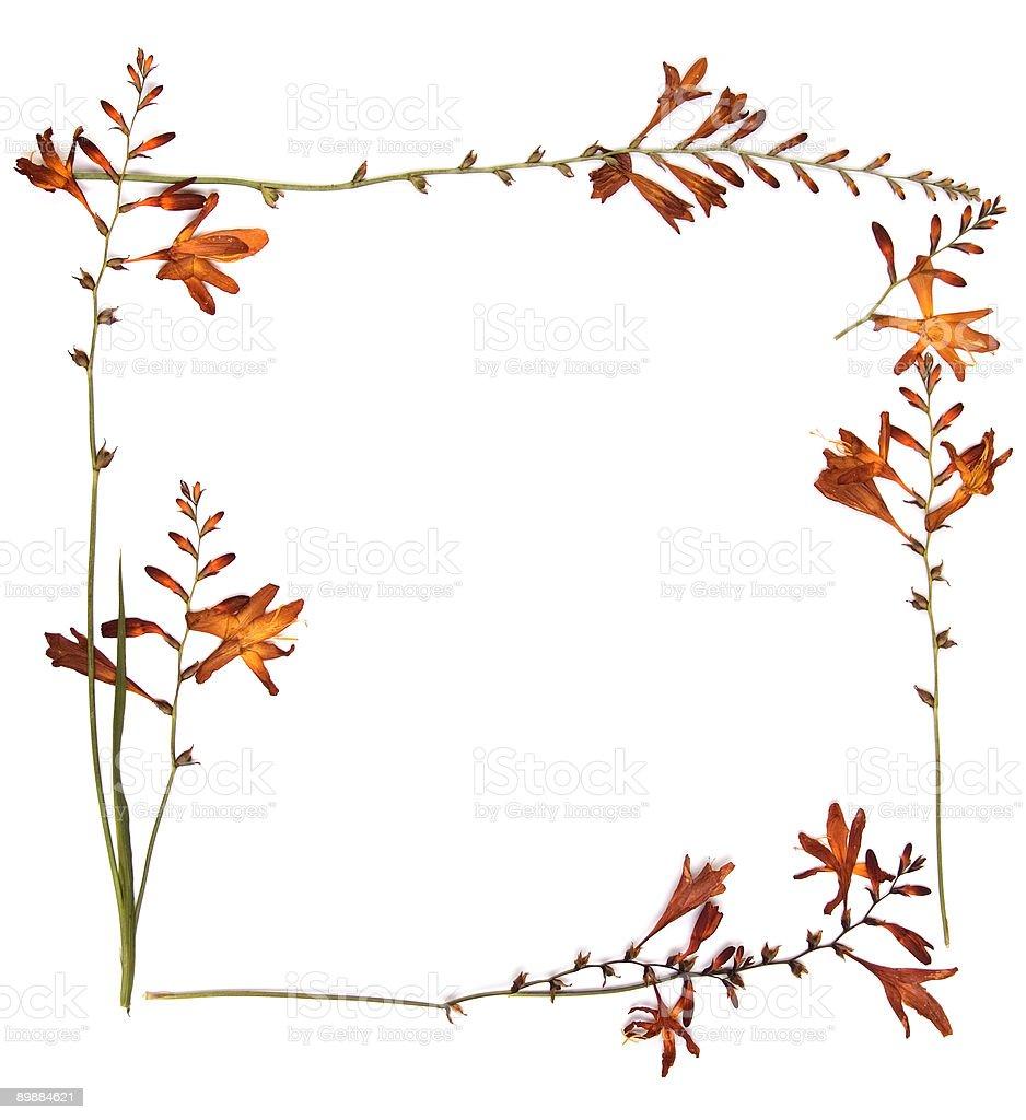 Flores secas foto de stock libre de derechos