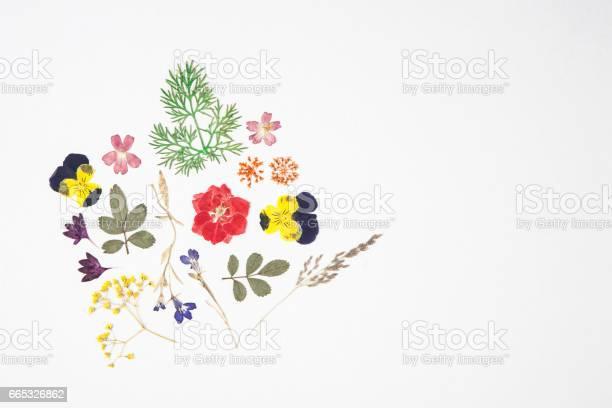 Dried flowers and leaves picture id665326862?b=1&k=6&m=665326862&s=612x612&h=4zqdcxxljesf5ismaupf7hw6sfu7svcd6awoqzqxw6q=