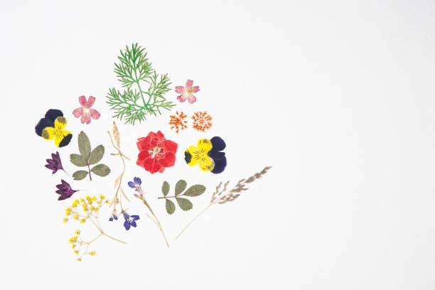 말린된 꽃과 나뭇잎 스톡 사진