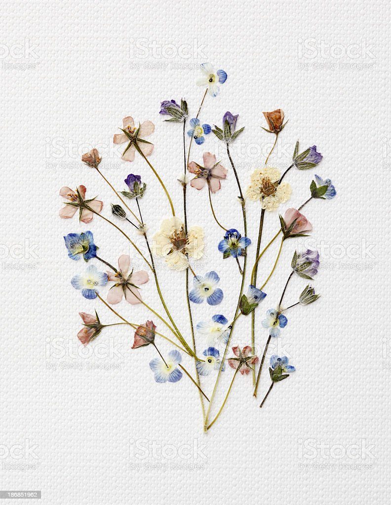 Dried Flowers Arrangement stock photo