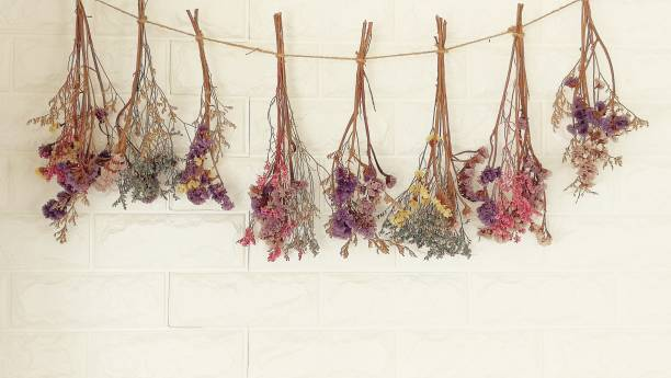 dried flowers hanging on the wall.It decoration wall of  living room dried flowers hanging on the wall.It decoration wall of  living room dried plant stock pictures, royalty-free photos & images