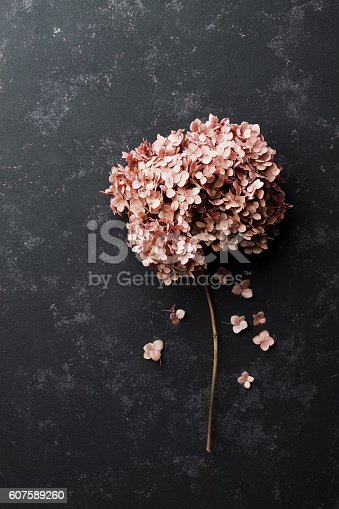 istock Dried flowers hydrangea on black vintage table, top view 607589260