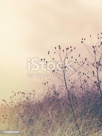 soft color desaturated photo