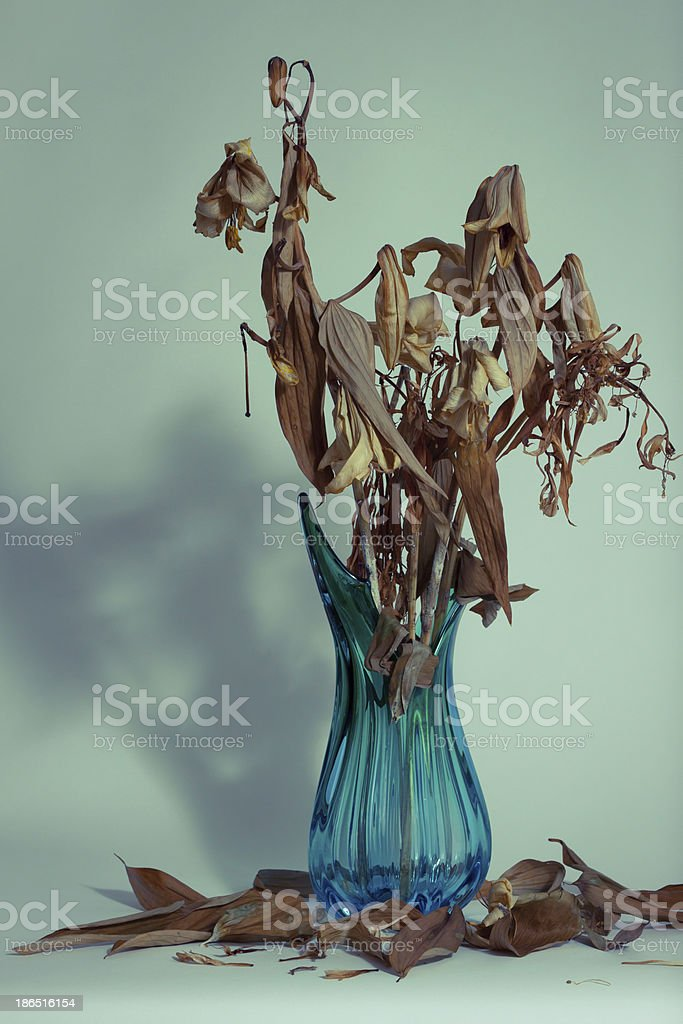 Dried flowers in a vase royalty-free stock photo