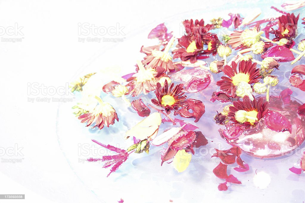 Dried flowers in water royalty-free stock photo