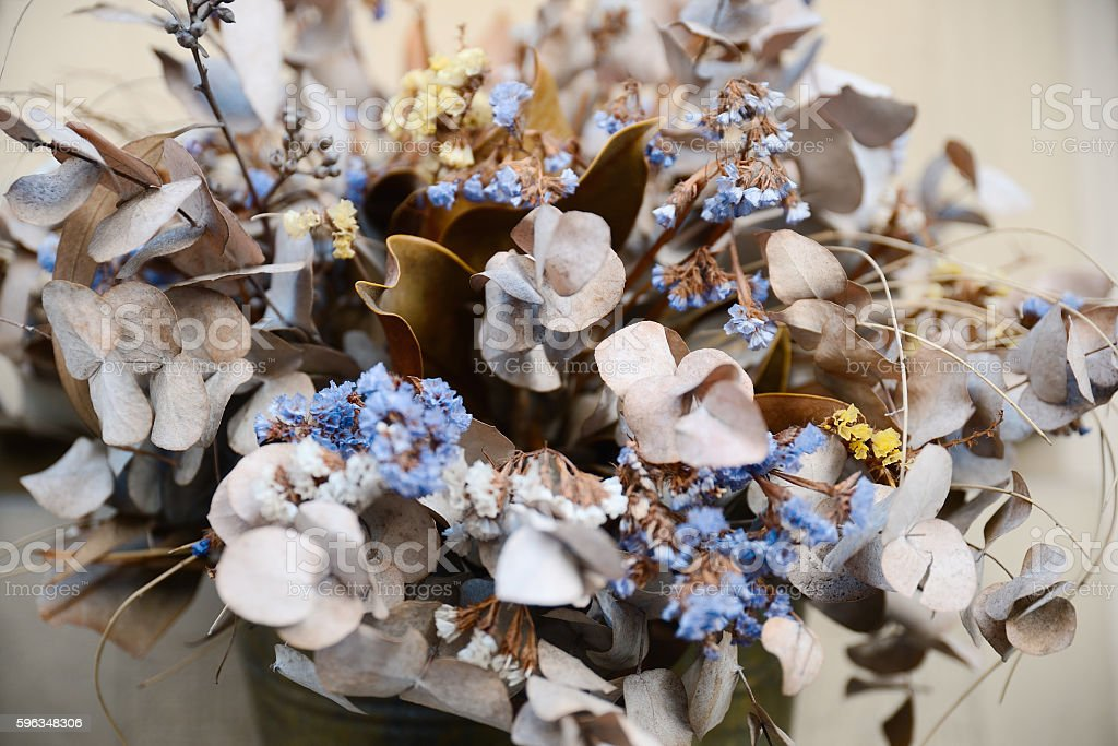 dried flowers Lunaria and statice - herbarium royalty-free stock photo