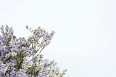 dried flowers of Calluna vulgaris or heather for background and decoration