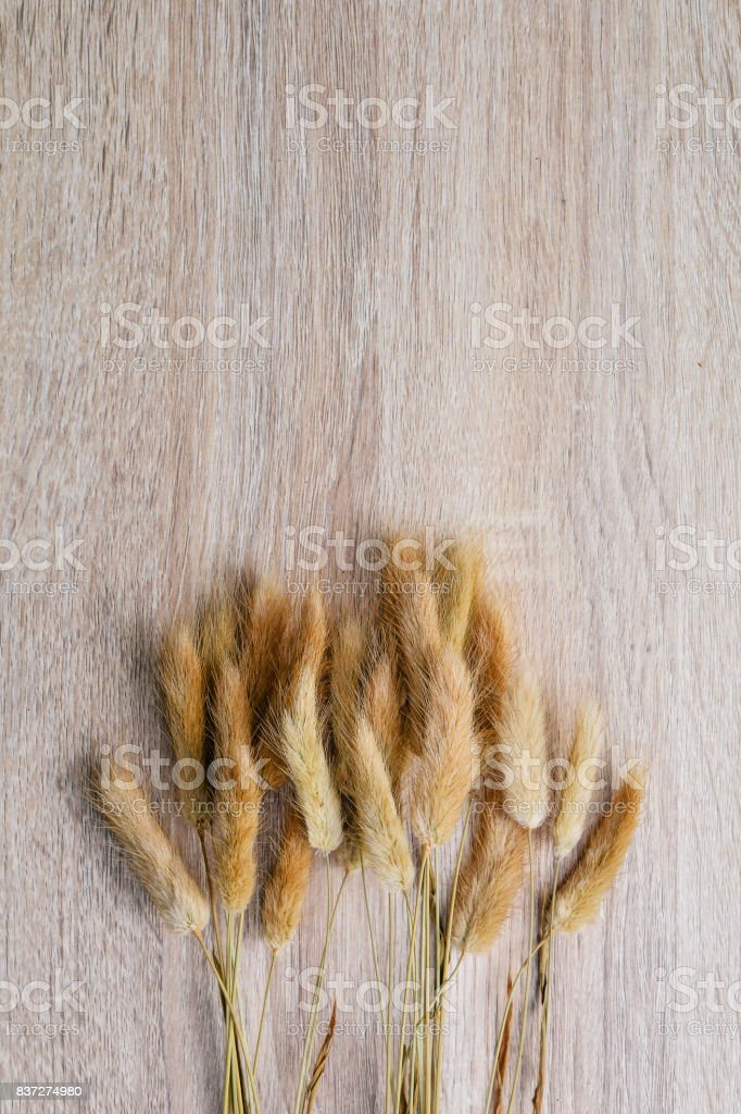 Fleurs séchées sur fond en bois - Photo