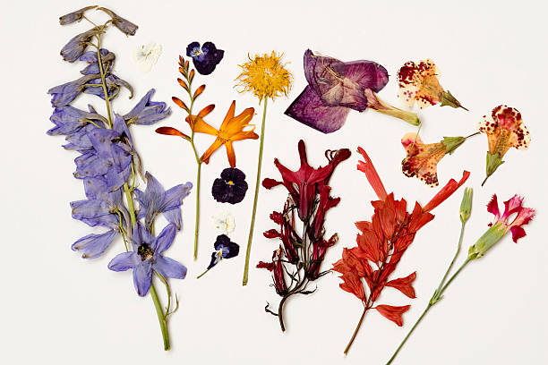 dried flowers - dode plant stockfoto's en -beelden
