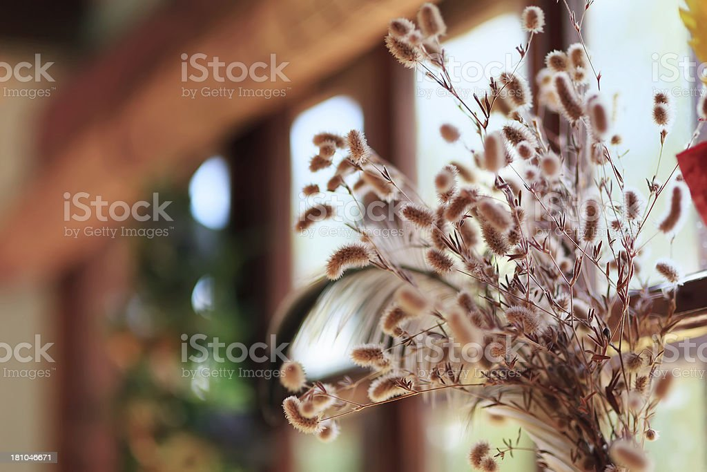 Dried flowers royalty-free stock photo