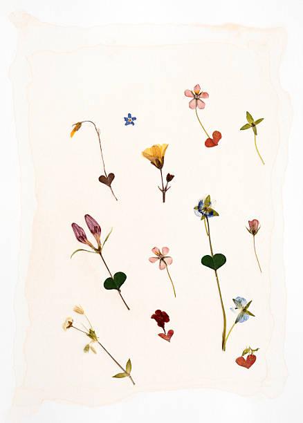 suszone kwiaty - zasuszony zdjęcia i obrazy z banku zdjęć