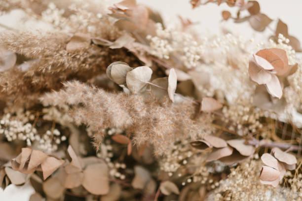 torkade blad bakgrund kreativ komposition - single pampas grass bildbanksfoton och bilder
