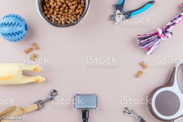 Dried food for pets leash and toys with comb copy space picture id1174387276?b=1&k=6&m=1174387276&s=612x612&h= 4qnky j4qwtw1k1lrntyjxmau41nkozly2simayx8y=