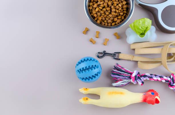 getrocknete Lebensmittel für Haustiere, Leine und Spielzeug mit Kopierplatz – Foto