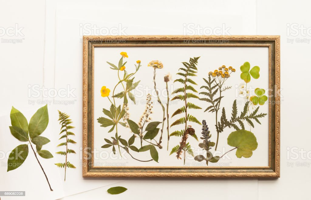 Getrocknete pflanzen