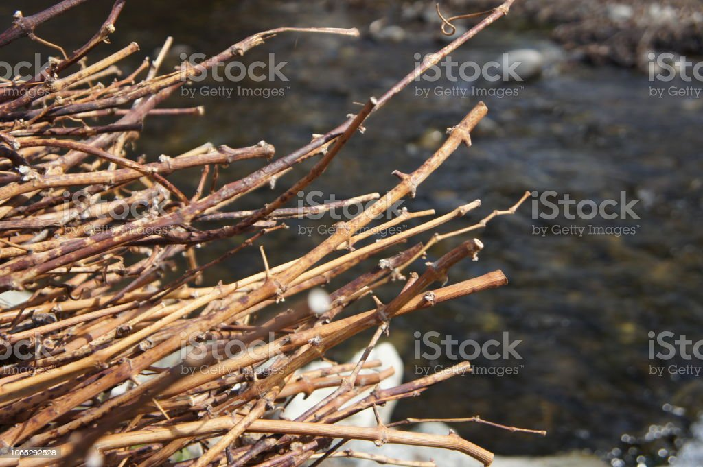 Dried grape vines piled by a river stock photo