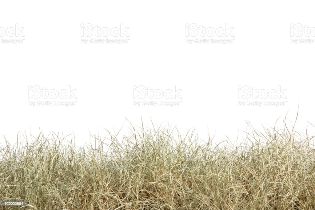 dry grass field background. Dried Grass Isolated On White Background.dry Field. Royalty-free Stock Photo Dry Field Background N