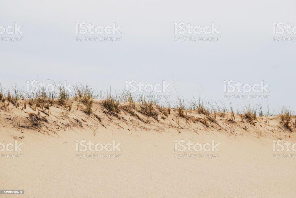 Gedroogd gras aan de rand van Duin - Royalty-free Blauw Stockfoto