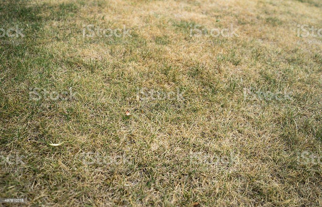 Dried Grass stock photo