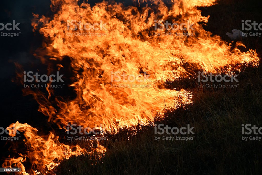 Dried grasses burning on roadside stock photo