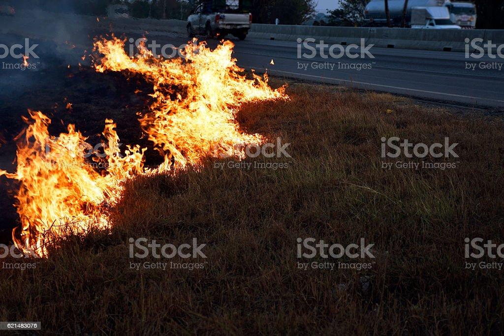 Dried grasses burning on roadside – Foto