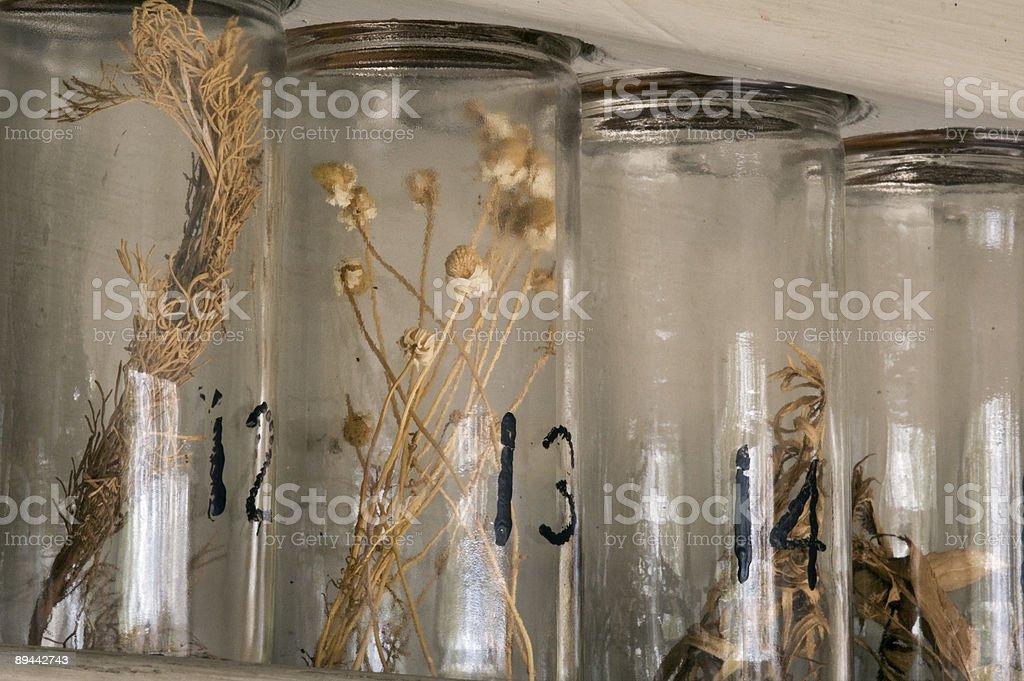 Affichage d'herbes séchées photo libre de droits