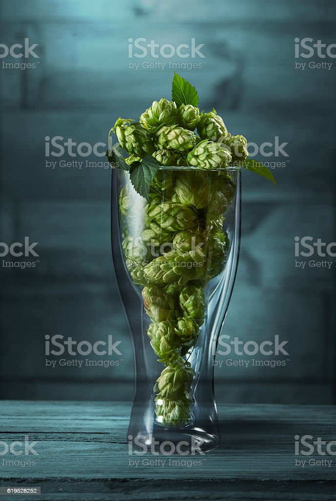 Dried hops in a glass stock photo