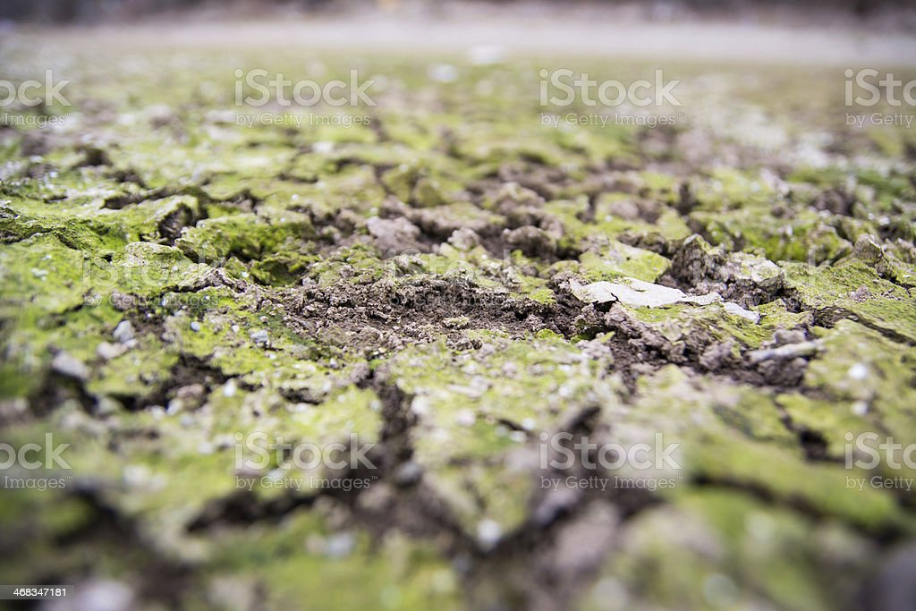 Dried land covered with moss royalty-free stock photo