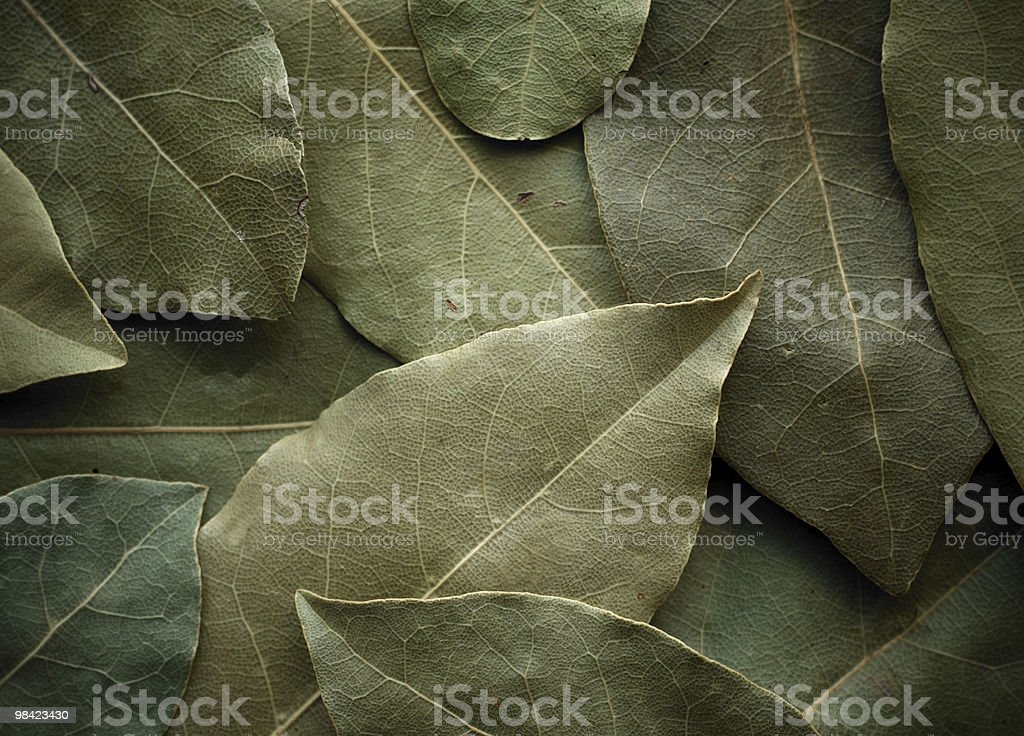 Dried laurel leaf horizontal background. royalty-free stock photo
