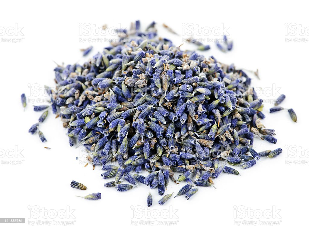 Dried lavender herb flowers stock photo