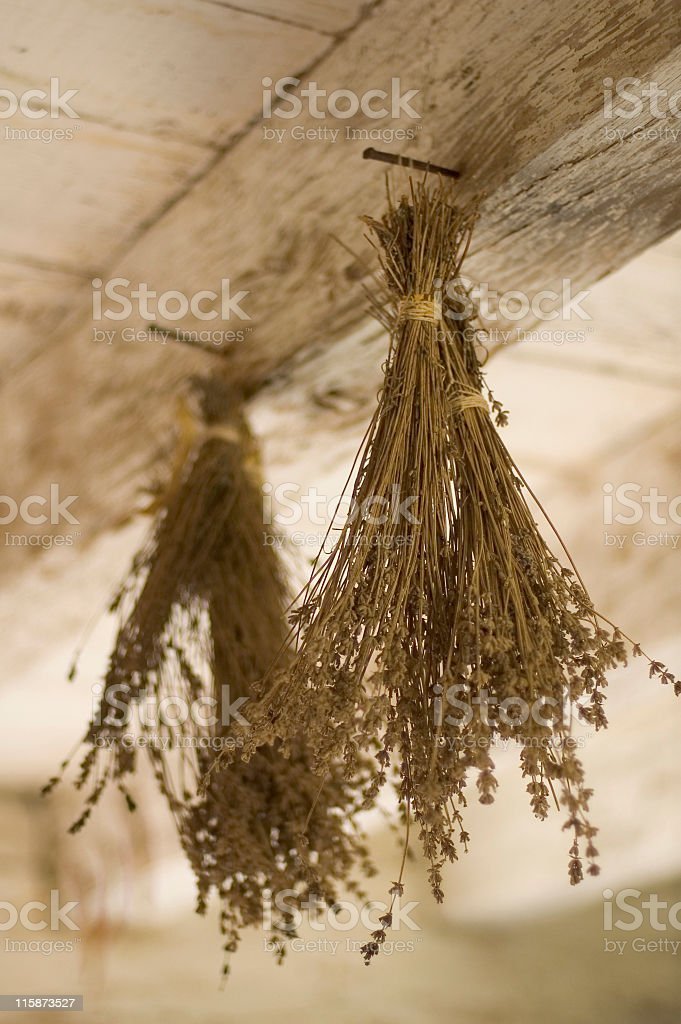 Dried Lavender stock photo