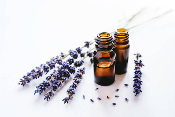 Dried lavender with a bottle of essential oil picture id1152249472?b=1&k=6&m=1152249472&s=612x612&w=0&h=dntpyplem tyxwqpkyha2fchtjcqfxe8var3z6kzxrq=