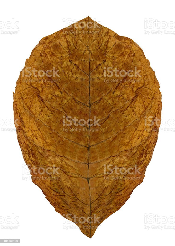 Dried leaf (CLIPPING PATH  included) stock photo
