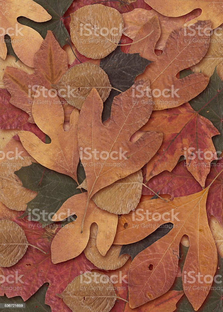Dried Leaf Potpourri. stock photo