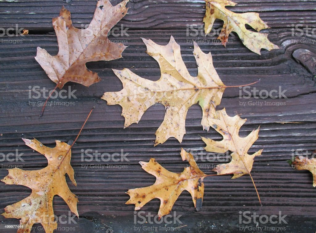 Dried Leaves on the Floor of a Wooden Deck stock photo