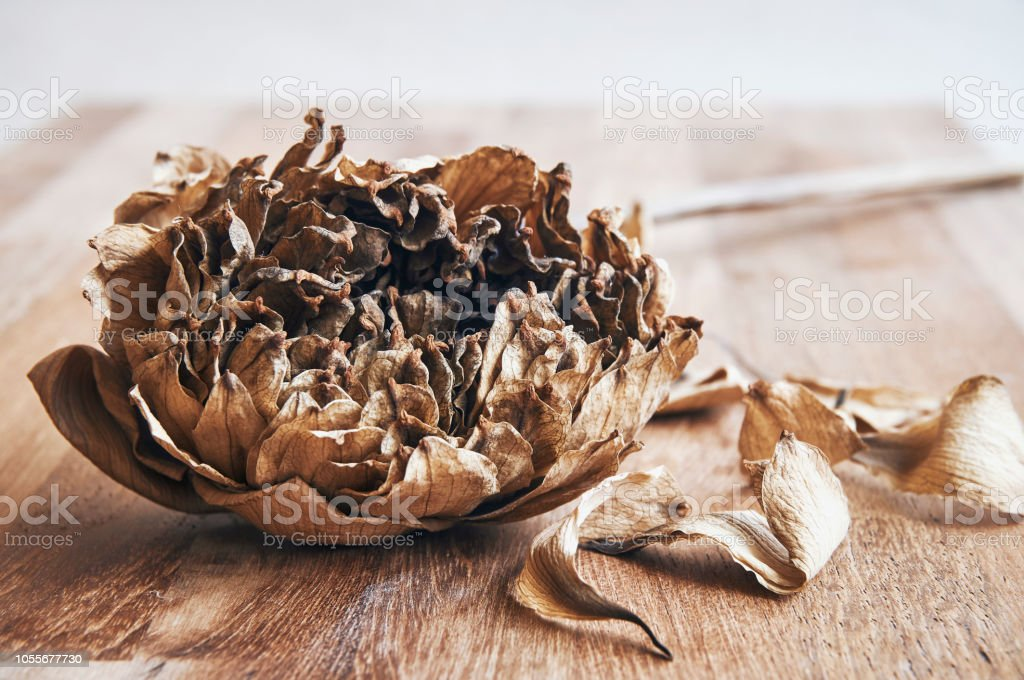 Dried Lotus Flower And Leaf Or Waterlily On Wooden Background Stock