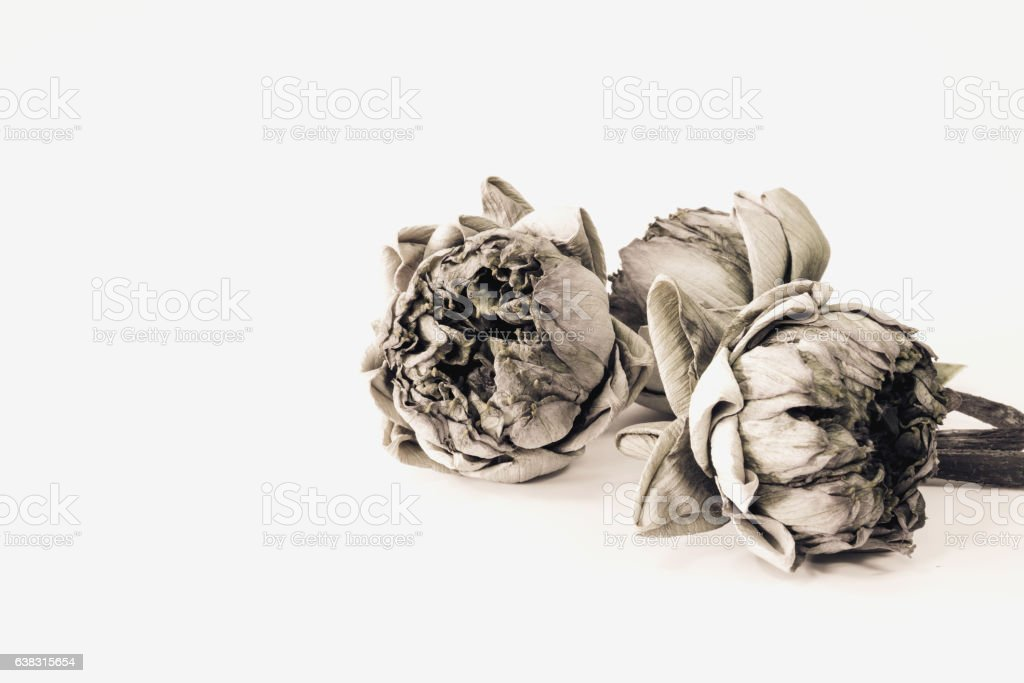 Dried lotus flowers stock photo istock dried lotus flowers royalty free stock photo mightylinksfo
