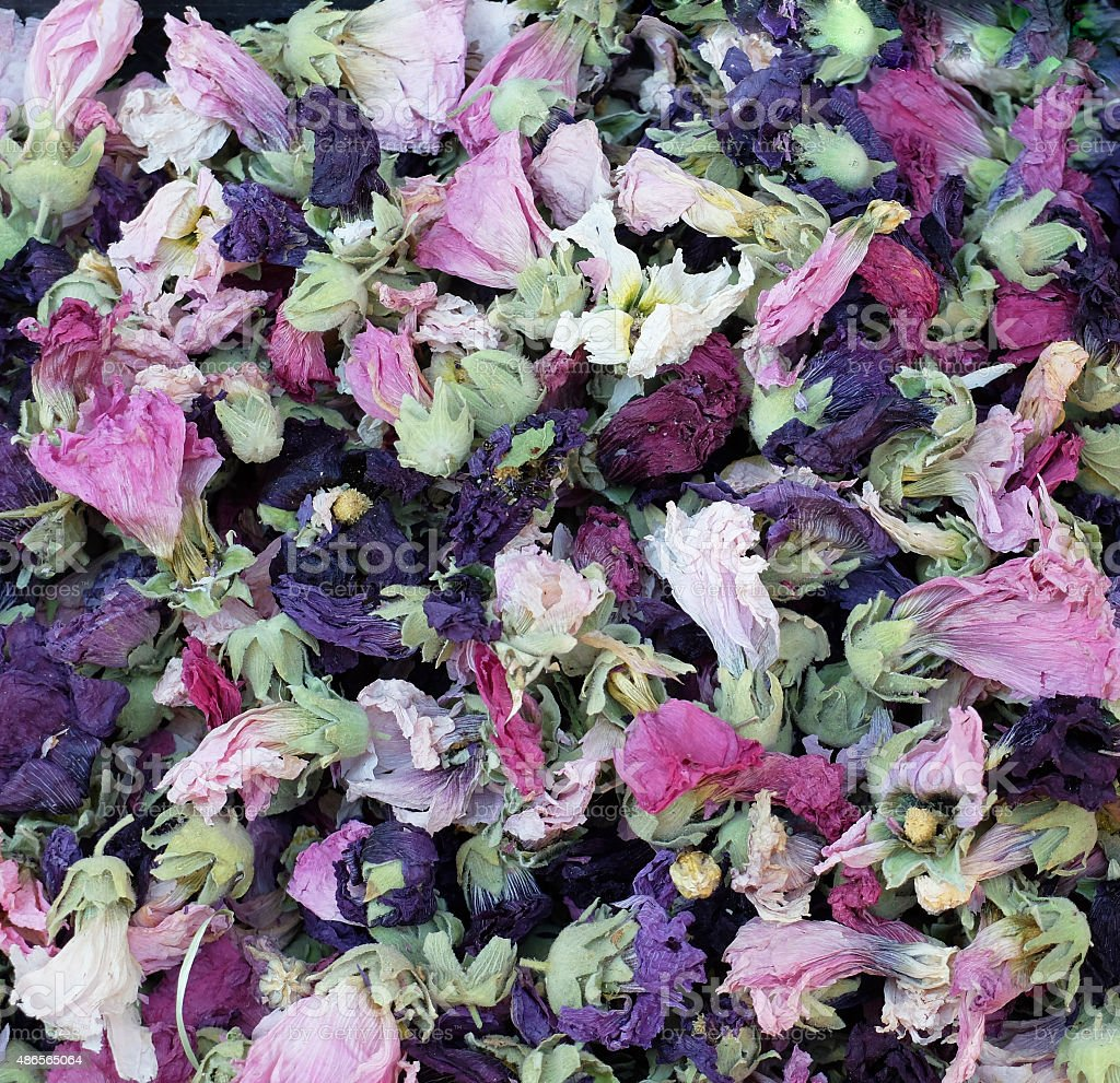Dried mallow flowers-Alcea Rosea stock photo