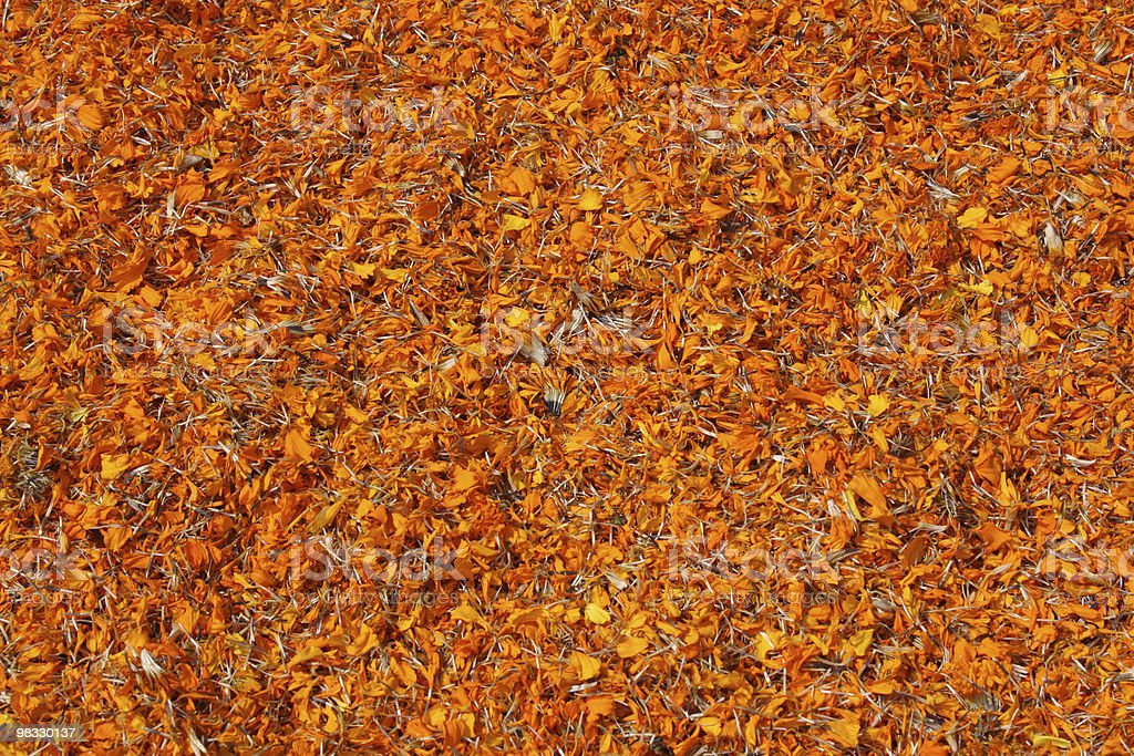 Dried marigold flowers (tagetes) royalty-free stock photo