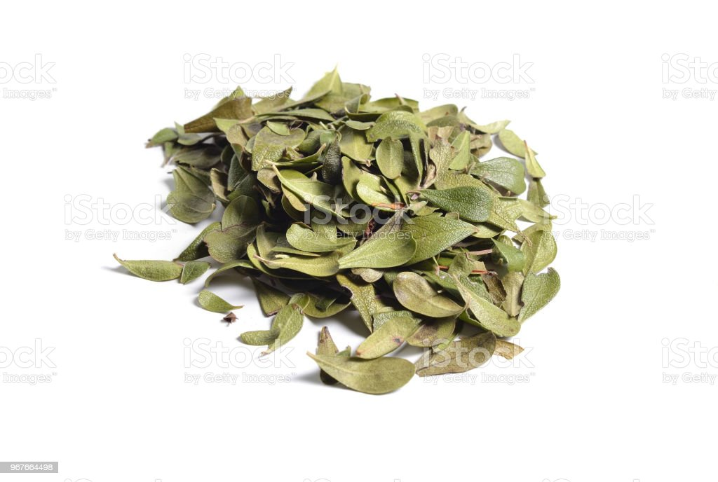 Dried medicinal herbs raw materials isolated on white. Leaves of Arctostaphylos stock photo