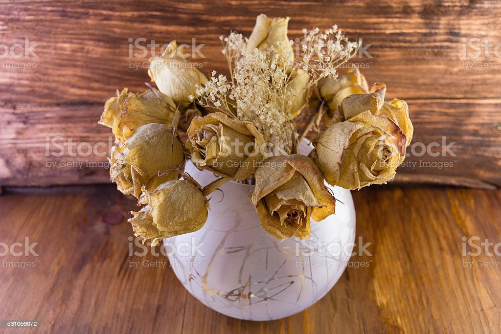 dried old dusty roses stock photo