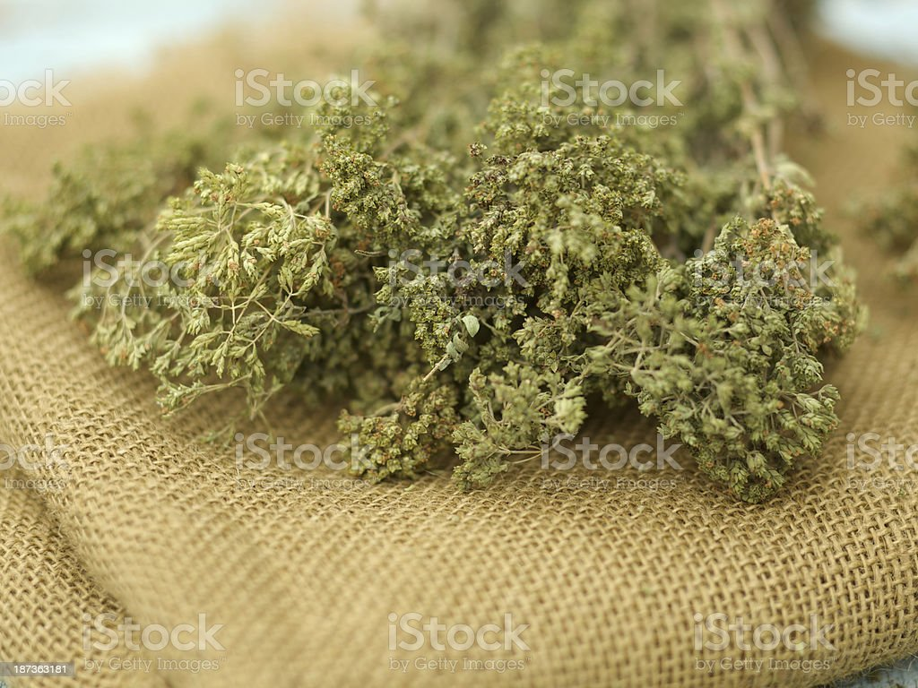 Dried oregano plants on brown canvas royalty-free stock photo
