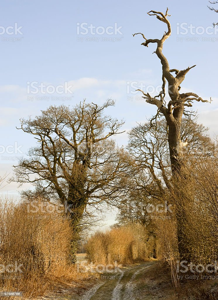 Dried Out Old Tree royalty-free stock photo