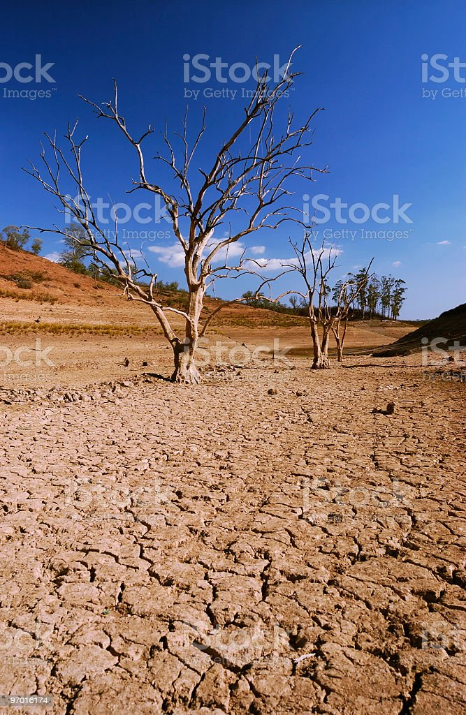 Dried out surface of lake with trees royalty-free stock photo