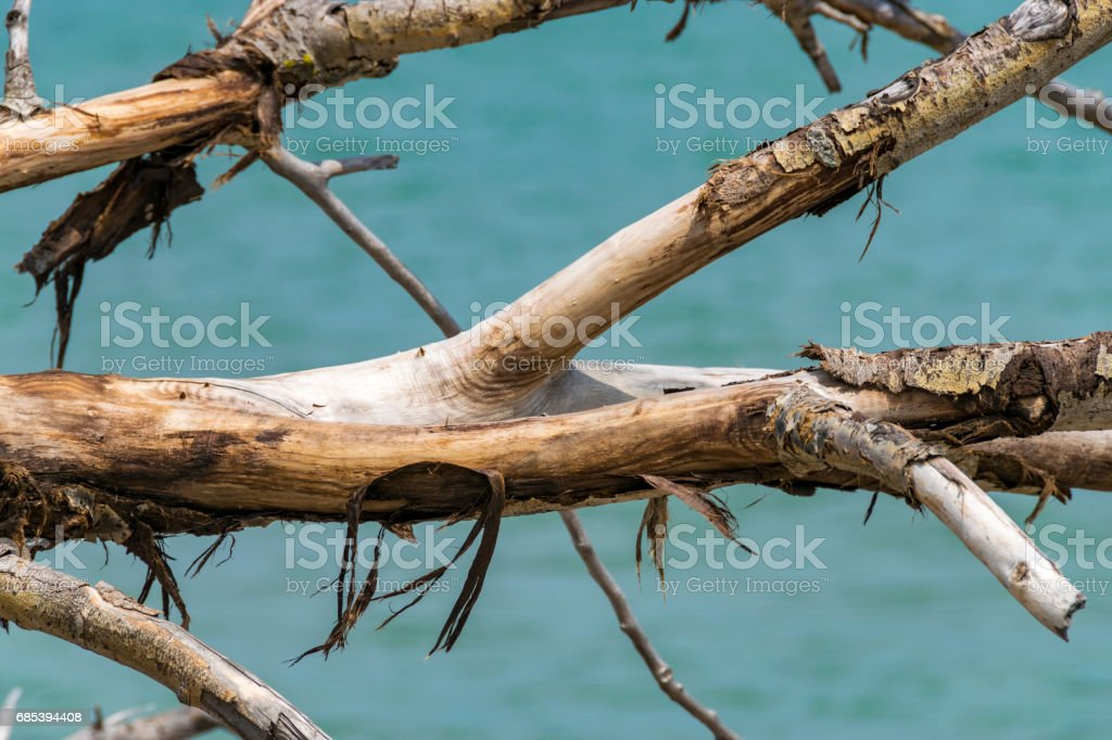 Dried out tree. royalty-free stock photo