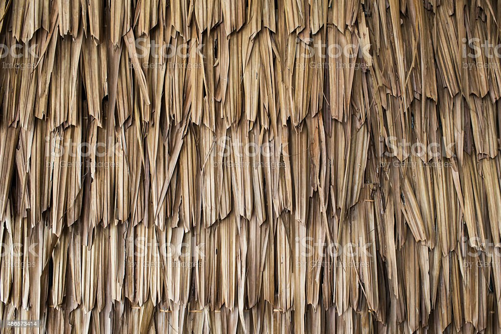 Dried palm texture stock photo