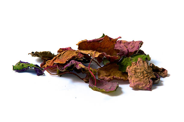 dried patchouly leaves stock photo