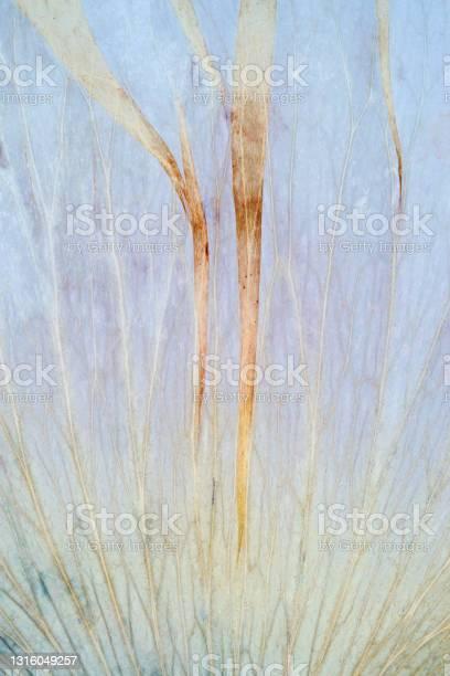 Photo of dried petals macro blue yellow green abstract