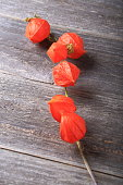 Dried physalis on wood background